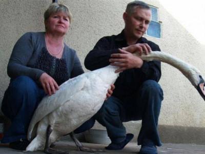 Семья Медведенко и лебедь Гоша