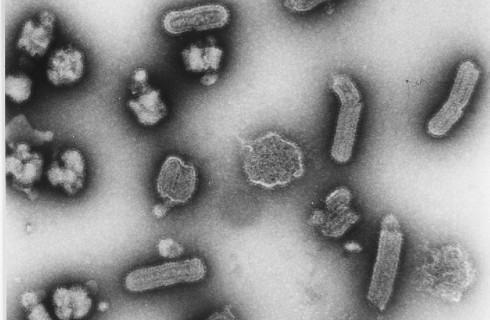 Исследователи создали зомби-клетки