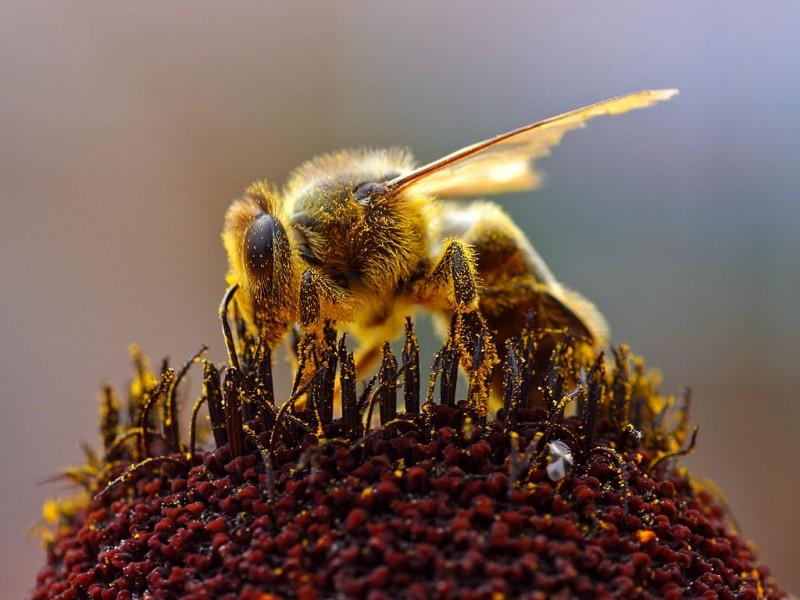 Пчелиный яд поможет побороть ВИЧ