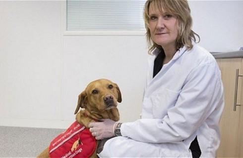 Собака обнаружила раковую опухоль у хозяйки