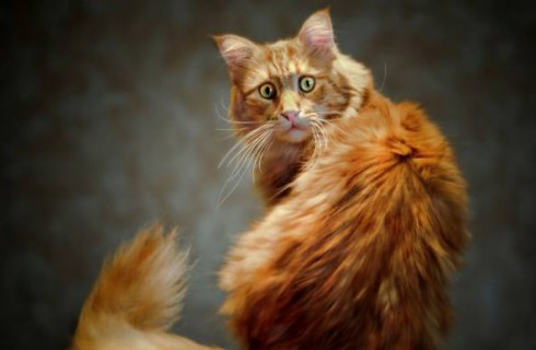 Кот защитил дом от грабителя