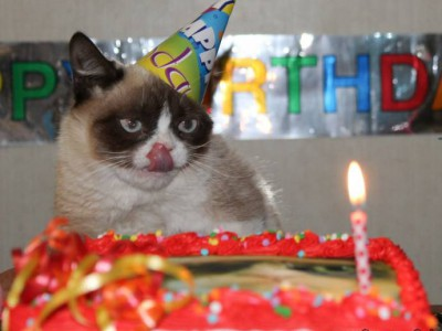 Grumpy Cat отметила День Рождения