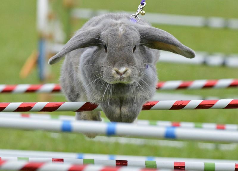 Харьковский зоопарк устраивает кроличьи бега