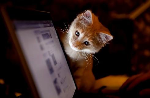 My Social Network – социальная сеть для домашних питомцев