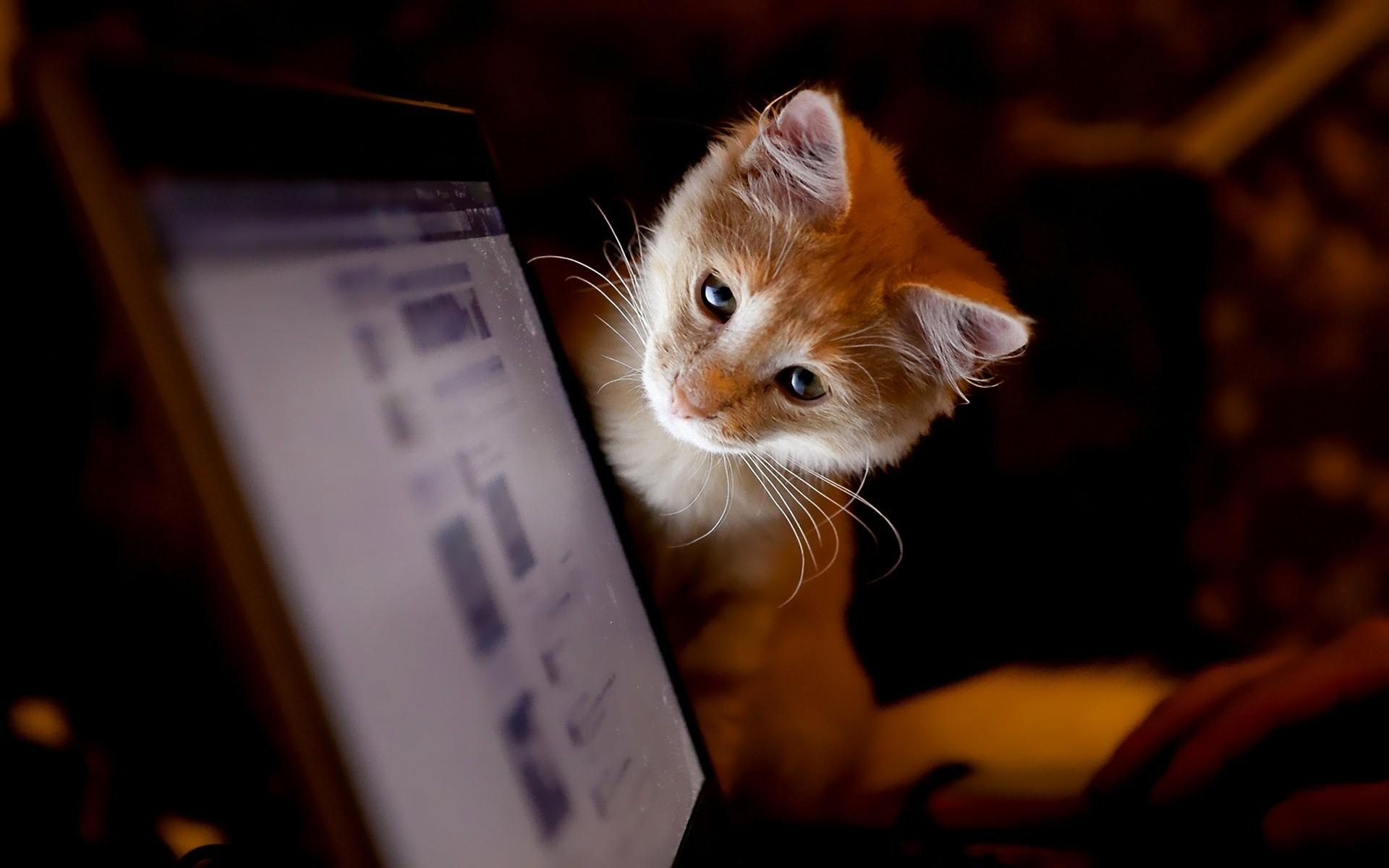 Новая социальная сеть my social