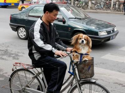 Собаки защищают от землетрясений