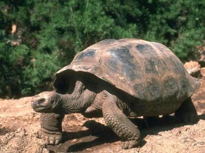 В Канаде спасли черепаху