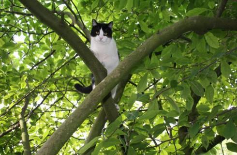 Кот и полицейский – два брата по несчастью