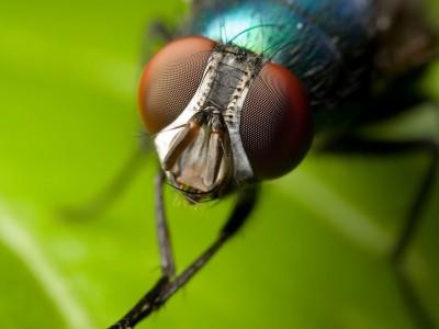 Робот очень похож на настоящую муху