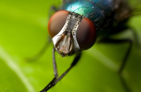 Робот-муха