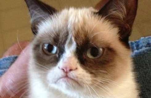 Про Grumpy Cat снимут фильм