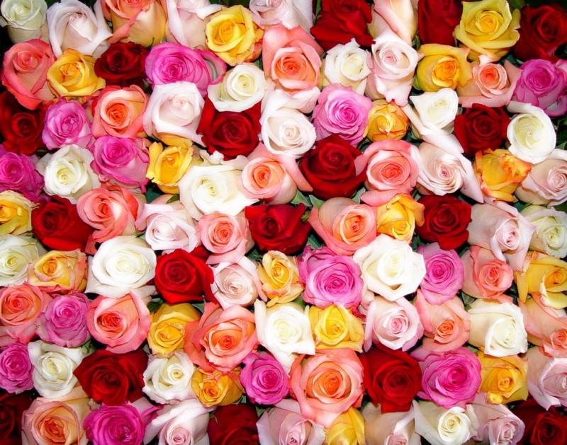 Как перевозят цветочную продукцию