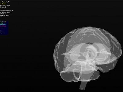 Ученые создают 3D-модель человеческого мозга