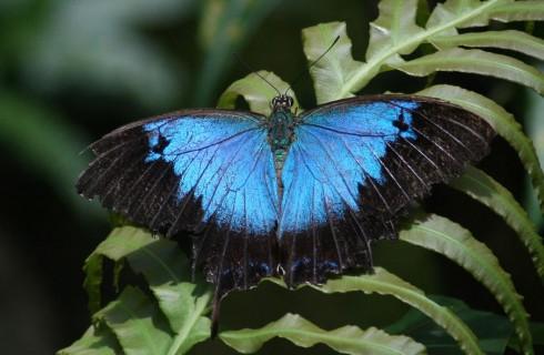 Крылья бабочки помогут создать меняющую цвет одежду