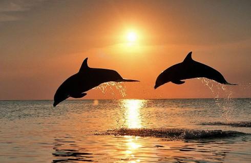 Открыто новое сходство между людьми и дельфинами