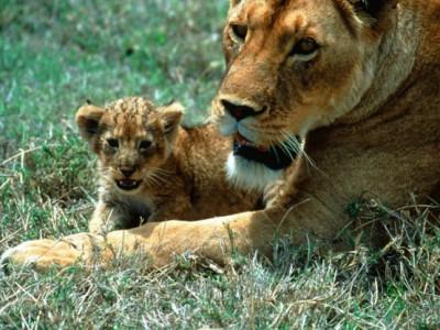 Млекопитающие способны выбирать пол будущего ребенка
