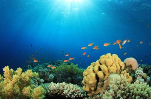 Рифовые рыбы используют солнце в качестве компаса