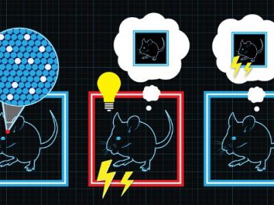 Ученые создают у мышей ложные воспоминания