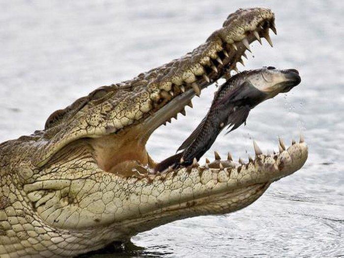 Крокодил гулял по набережной Екатеринбурга