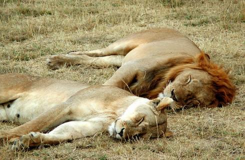 Содержание сна зависит от позы спящего