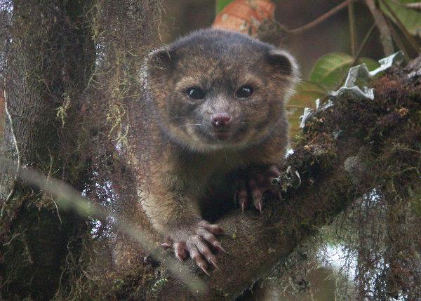 Американские ученые обнаружили новый вид млекопитающих