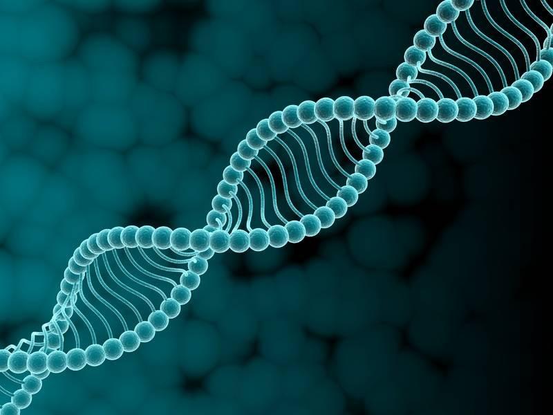 Микстура из генов восстановит после инфаркта