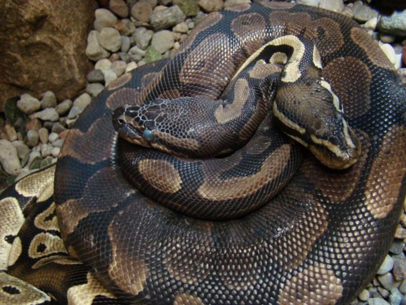 Постояльцы забыли в номере отеля несколько десятков змей