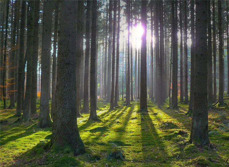 Макулатура в переработку – лесам жизнь