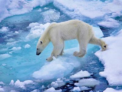 Человечество виновато в глобальном потеплении
