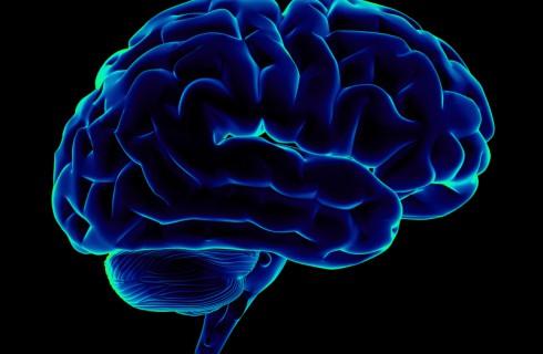 Мозг in vitro