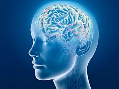Заглянуть в мозг