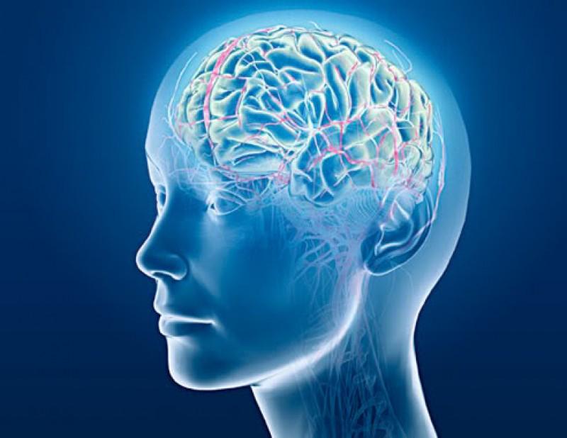 Способ заглянуть в мозг через окно