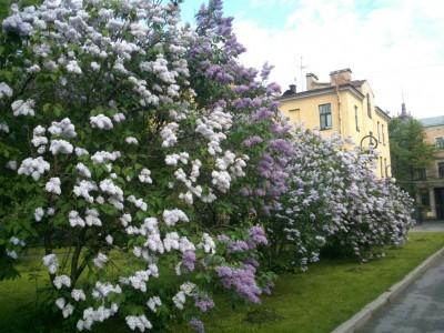 Завершен первый этап реконструкции Ботанического сада
