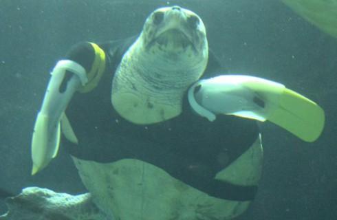 Удивительная черепаха с протезами