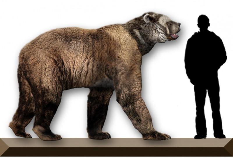 Геном древнего пещерного медведя больше не секрет