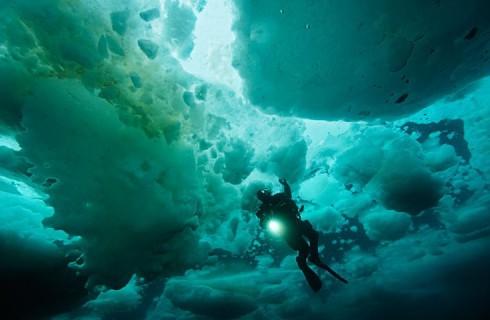 В Японском море нашли сотни новых живых организмов