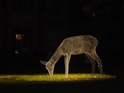 Парк «Царицыно» — светящиеся фигуры