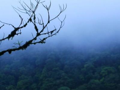 Леса Суринама