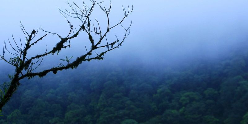 60 новых видов животных нашли в лесах Суринама