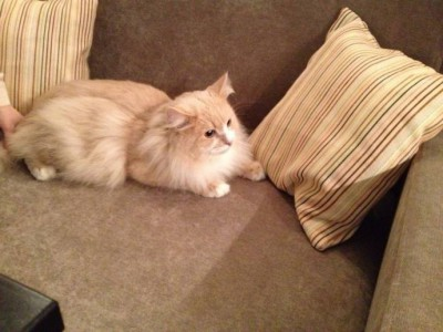 «Cat house» появился в Перми