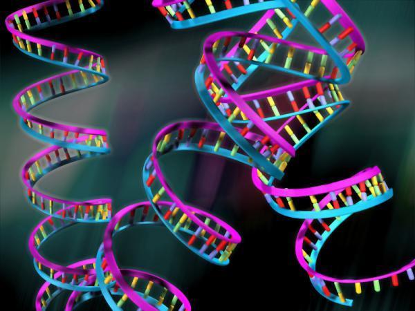Участки генома влияют на форму морды