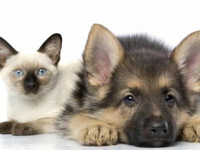 Владельцам кошек и собак добавят налог на домашних любимцев