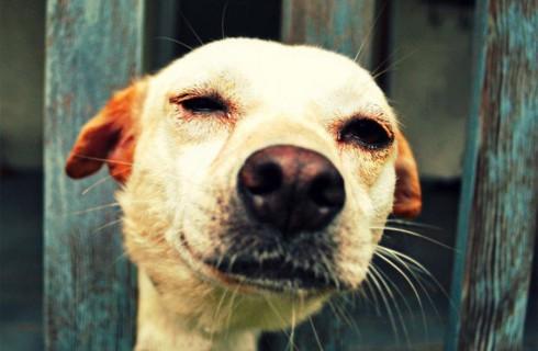 В Карелии собираются ввести запрет на убийство бездомных собак