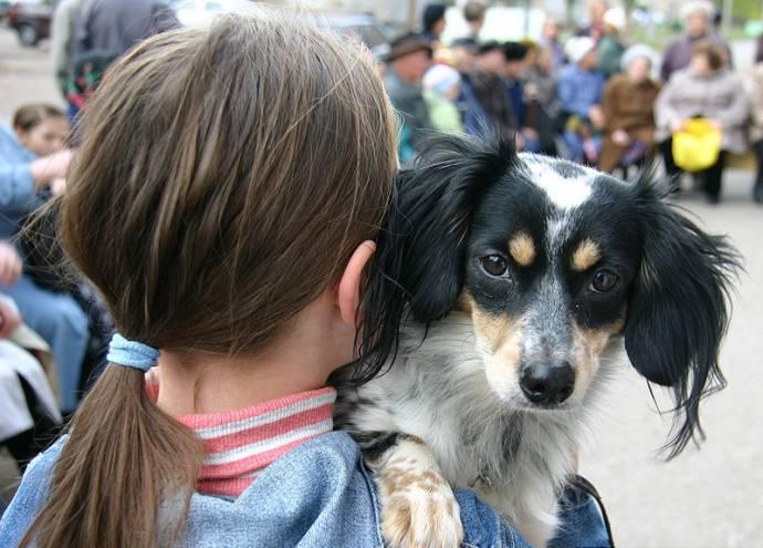 В Великом Новгороде появились уроки любви к животным