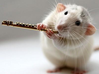 В Одессе прошел конкурс красоты среди…крыс