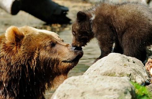 Медведи проверили ход работ по реконструкции стадиона «Спартак»