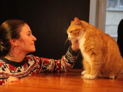 Петербургские коты приняли участие в кастинге