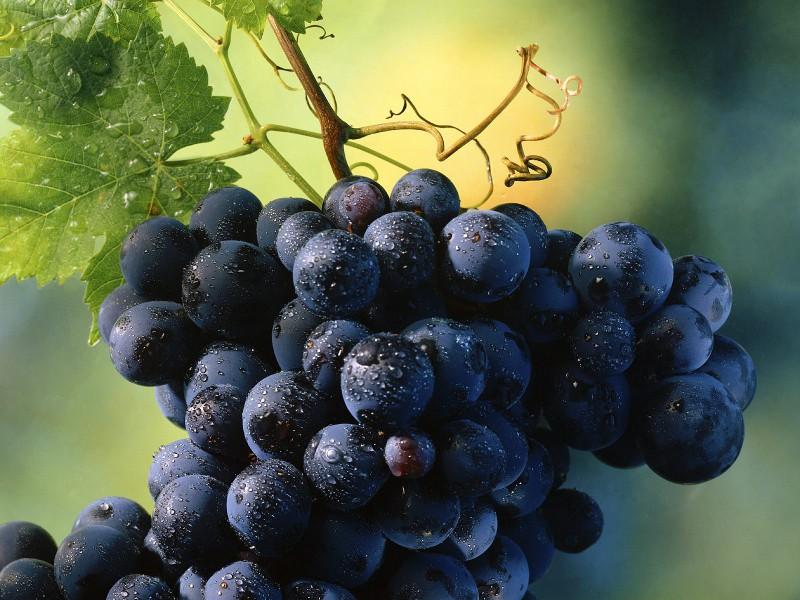 Виноград позволит избавиться от лишнего веса