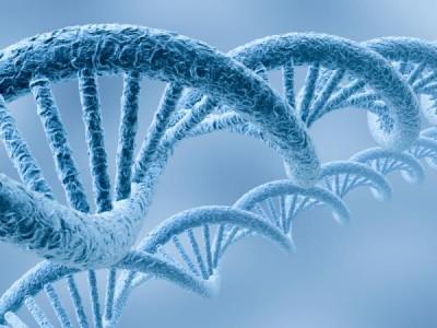Обнаружен ген, возвращающий молодость