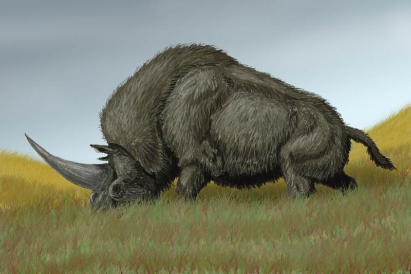 Древний носорог обнаружен под Тобольском